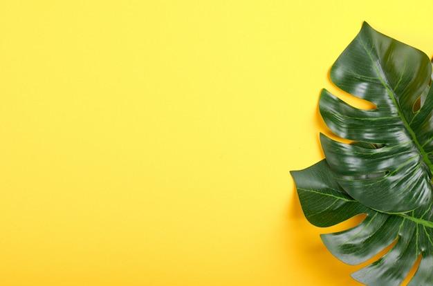 Green monstera leaf composition on color background.