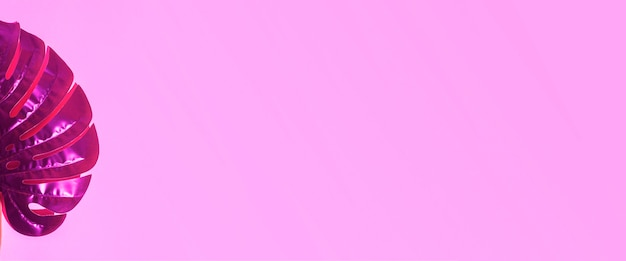 Зеленый лист монстера на розовом фоне. вид сверху, плоская планировка. баннер.