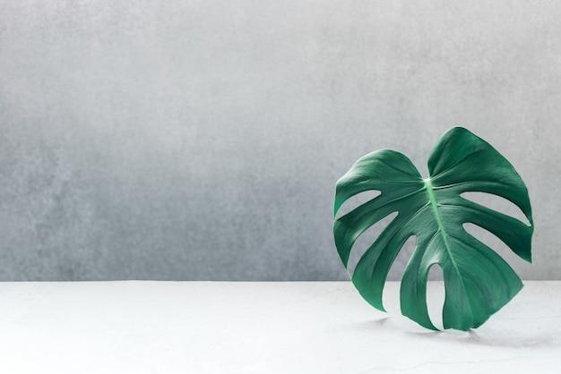 밝은 배경 복사 공간에 녹색 monstera 잎. 여름 자연 스파 패션 개념.
