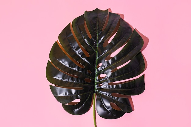 Green monstera leaf on a pink background. top view, flat lay