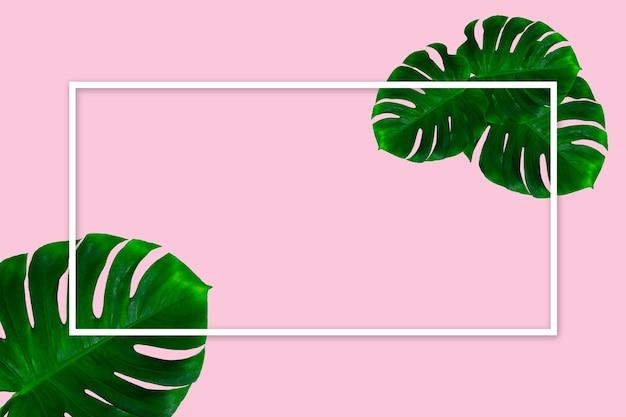 緑のモンステラの葉は、白い幾何学的なフレームとピンクの背景に分離されました。広告、デザインのチラシ。