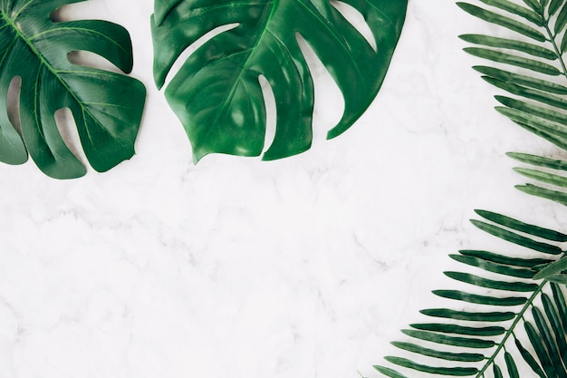 Green monstera and palm leaves on marble textured backdrop