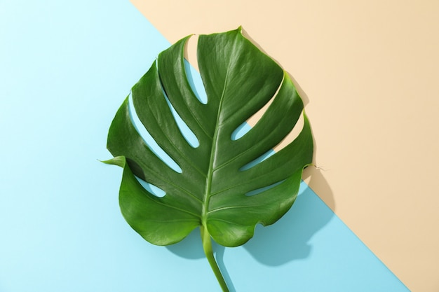 Green monstera on two tone table