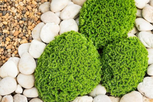 緑の苔とがれが美しく配置されています。