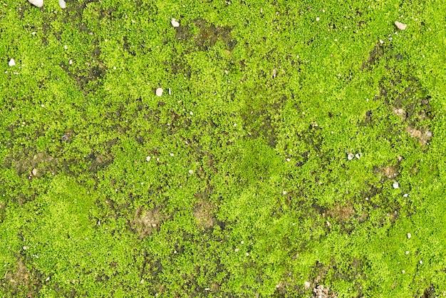 Green moss bakground