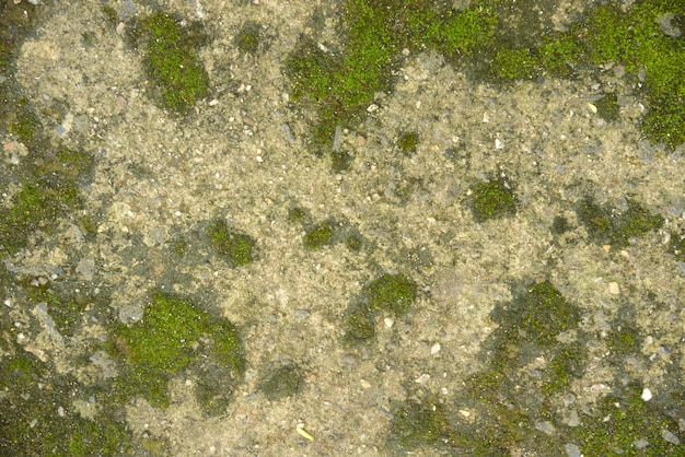 Green moss on cement wall