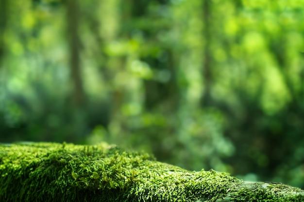 녹색 이끼 가까이, 숲 풍경 배경. 소치 국립 공원, 유-회양목 숲