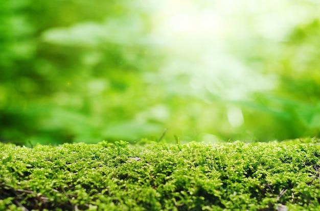 Зеленый мох крупным планом с расфокусированным фоном.
