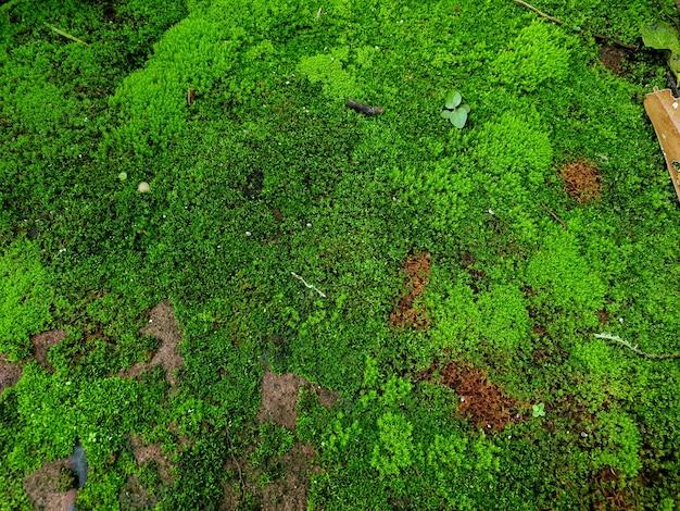 石に覆われた緑の苔