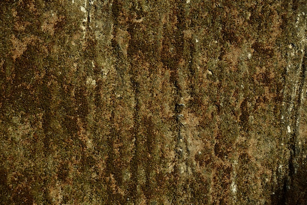 Green moss dry background