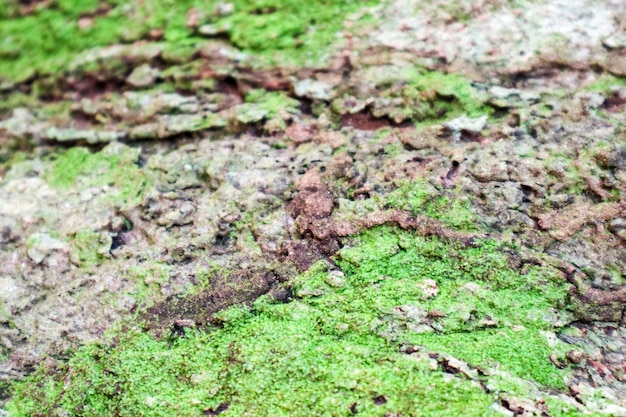 Green moss and fungus grown on wood surface in rain forest
