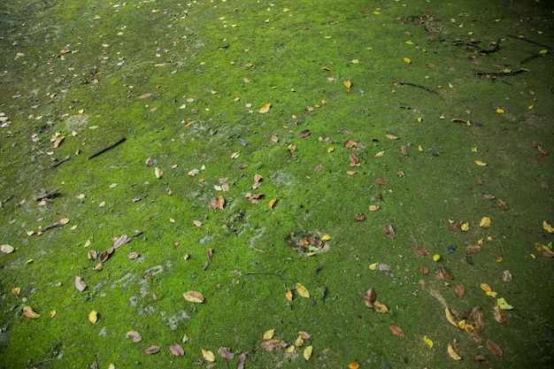 Green moss on ground in forest jungle
