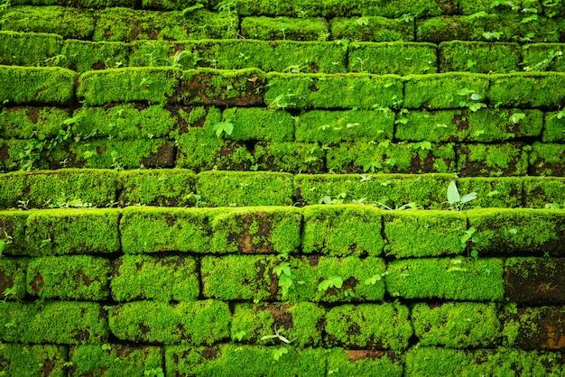Зеленый мох, растущий на старой кирпичной стене, вечнозеленый зеленый мох в первобытном лесу, расположенный в национальном парке интанон, чиангмай, таиланд
