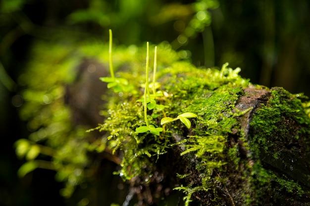 コスタリカの木の枝に成長している緑の苔