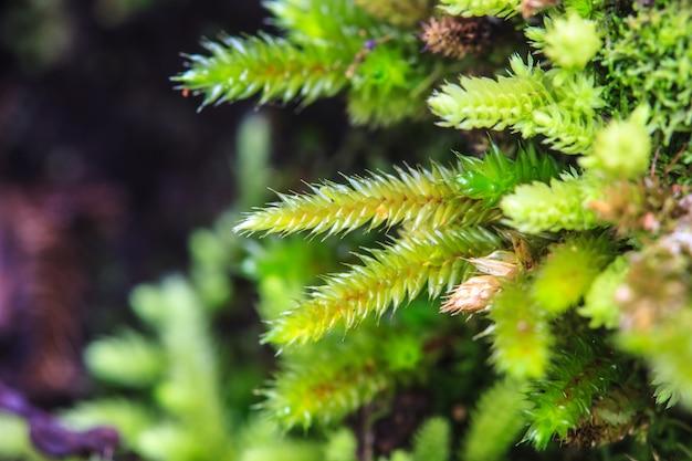 Зеленый мох в лесу