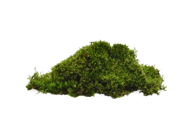 Зеленый мох, изолированные на bakground