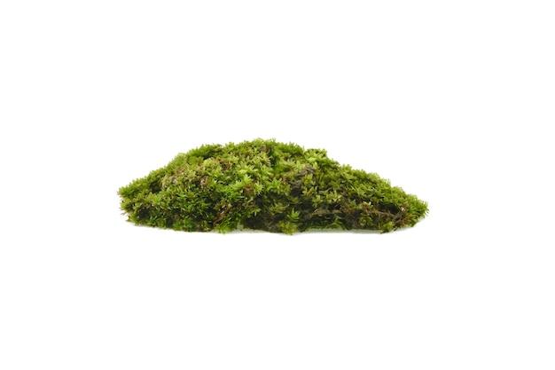 Зеленый мох, изолированные на белом фоне