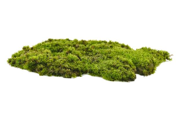 Зеленый мох, изолированные на белом фоне Premium Фотографии
