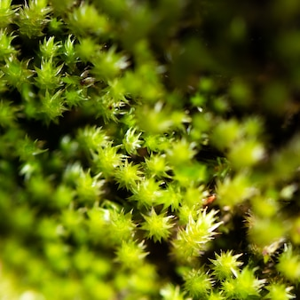 Зеленый мох макросъемки
