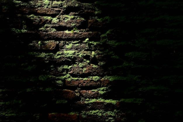 Green moss at old brick wall