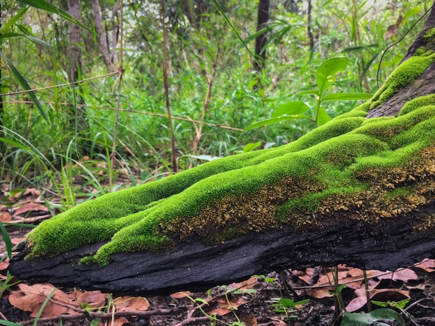 Green moss on old tree floor for use as background