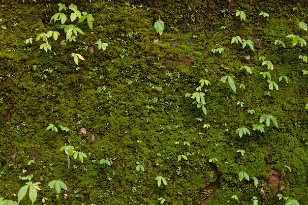 Green moss on the old wall