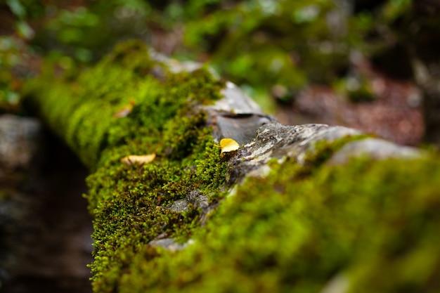 Зеленый мох на старом упавшем бревне