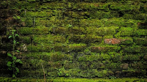 レンガの壁に緑の苔