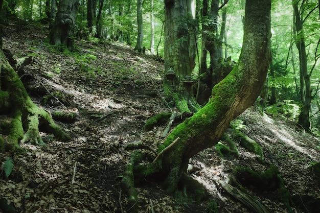 茶色の木の幹に緑の苔