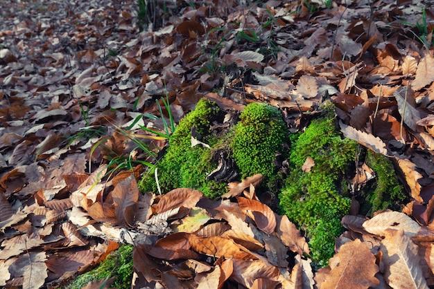 낙엽에 녹색 이끼
