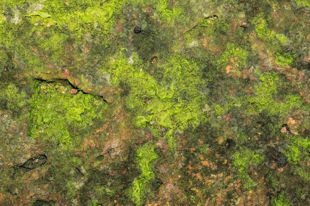 石のテクスチャの緑の苔