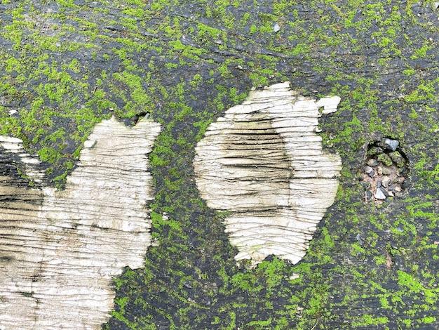 Зеленый мох на каменной стене