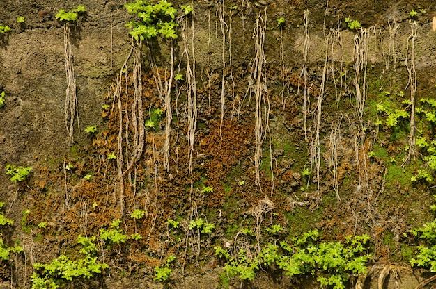 日光の下で石の壁に緑の苔