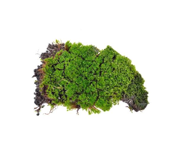 白地に緑の苔