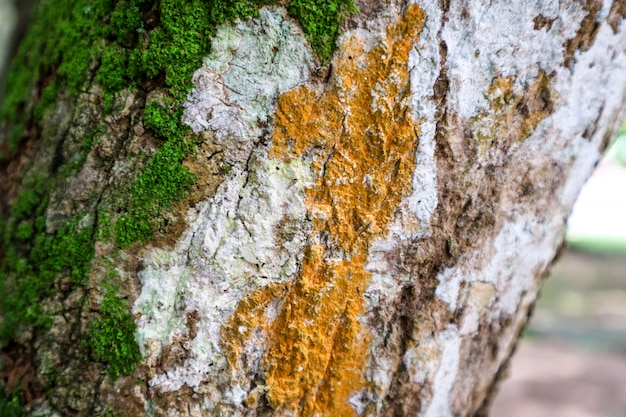 Green moss and orange fungus grown on wood surface in rain forest