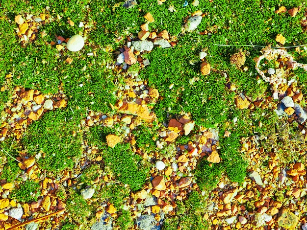 Green moss on orange stones. close up, top view