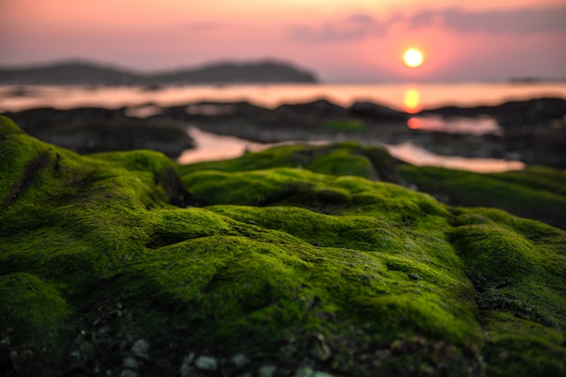 Green moss on the reef