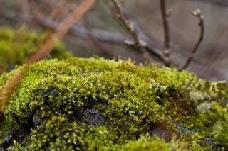 Green moss, shady