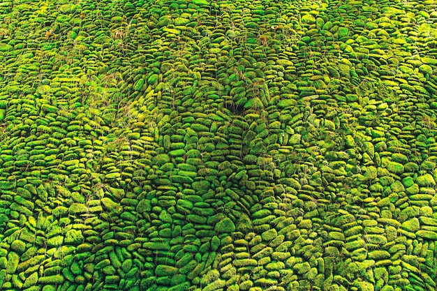 Green moss on stone wall with sunlight and shadow.