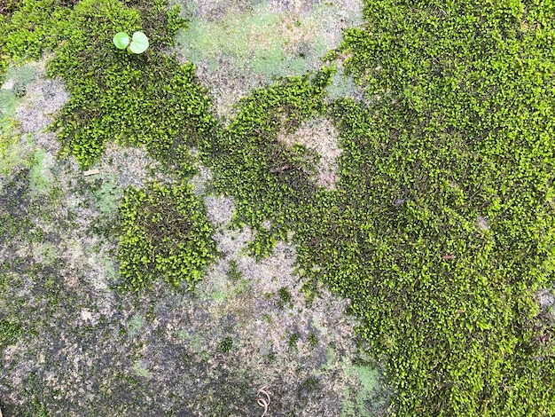Текстура зеленого мха и фон