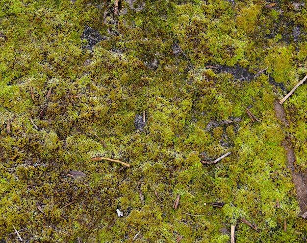 Green moss texture on grey stone. organic background.