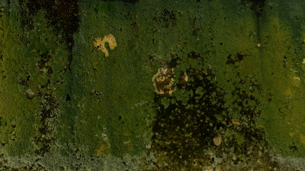 Green moss texture on the wall perfect for background.