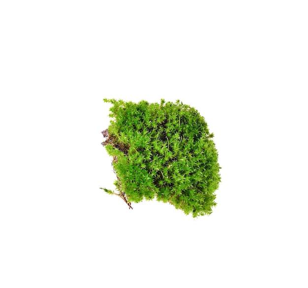 Green moss on white