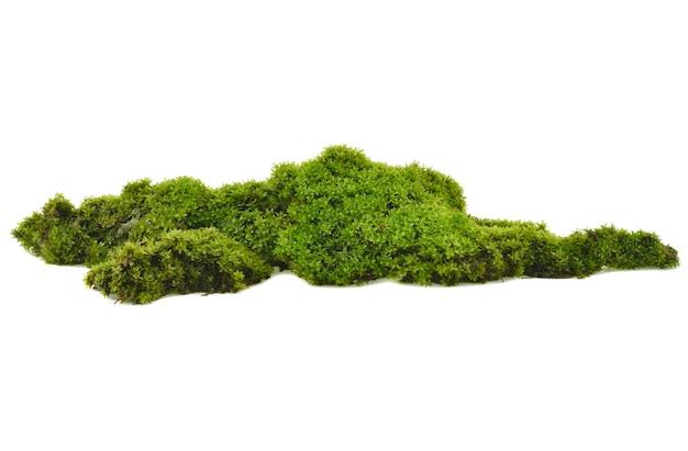 Зеленый мох с травой, изолированные на белом фоне