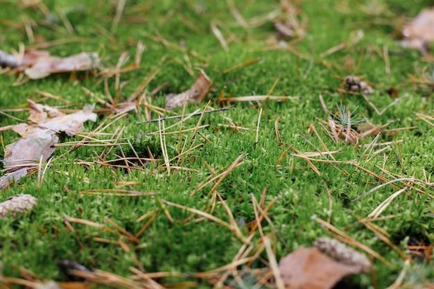 森の中の松葉と緑の苔。バックグラウンド