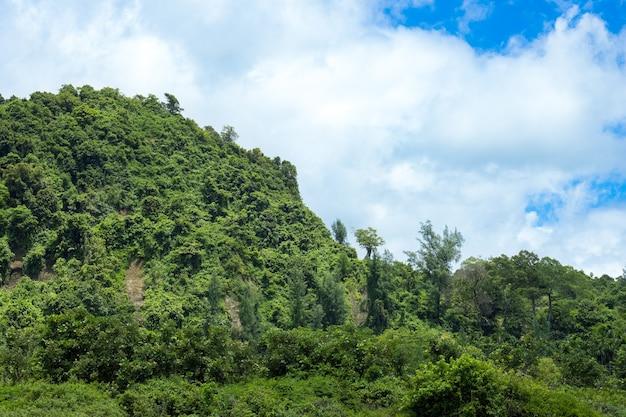밝고 맑은 하늘 아래 녹색 산 가까이보기