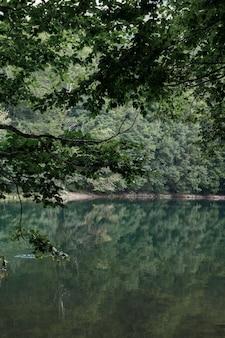 森の自然の背景を持つ緑の山の湖