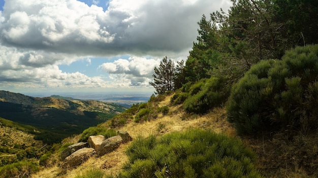 谷を見下ろす地中海の森の緑の山の風景。