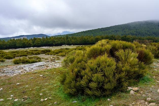霧と野生の茂みのある山々と緑の山の風景。マドリッド。