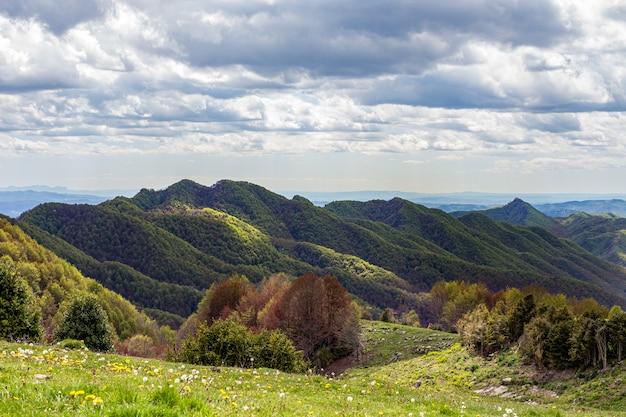 전경 카탈루냐 스페인에서 태양 숲과 녹색 초원에 의해 부분적으로 조명 녹색 산 봉우리